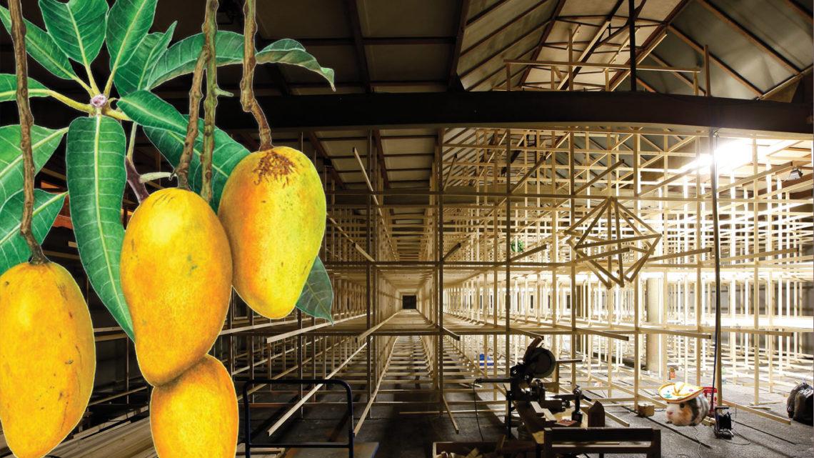 Titelbild CKÖ: Mango di Verni – Kunsthalle Arbon